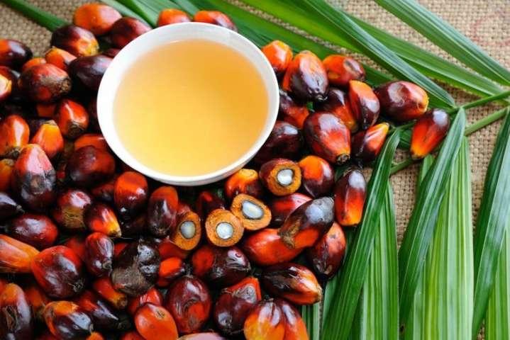 Пальмова олія: застосування, склад, користь і шкода масла