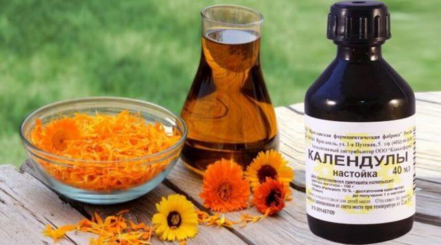 Для чого застосовується настоянка календули: 14 корисних властивостей квітки